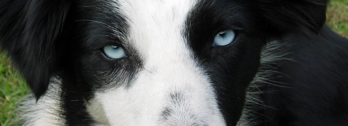 Look at your dog's eyes!